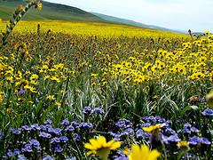 Wildflowers off Hwy. 41